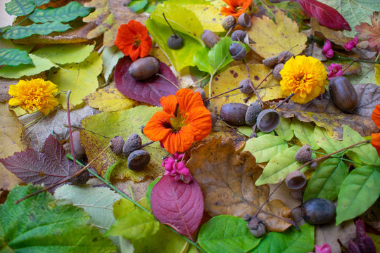 Fall colors. Autumn leaves and flowers