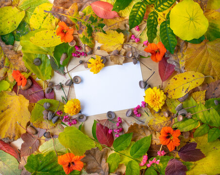 Colorful autumn leaves background. Autumn banner to online shop