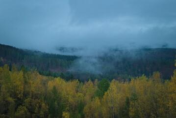 Zamglony jesienny las.