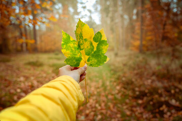Jesienny liść w ludzkiej dłoni