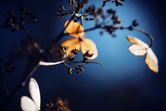 In the twilight of the night, a flower with white, delicate petals wilted in the moonlight. Late summer.