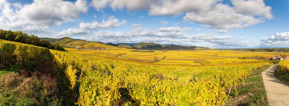 Vignoble de la plaine d'Alsace et les collines sous-vosgiennes, Alsace, Grand Est, France