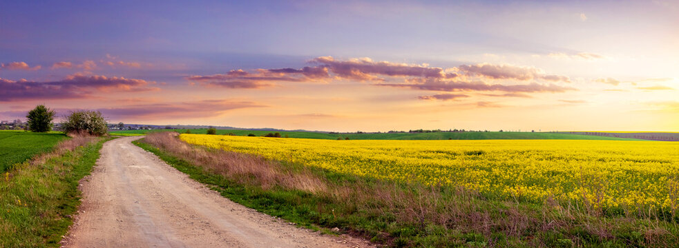 Dirt road in a field with rapeseed during sunset, scenic sunset in the field, panorama