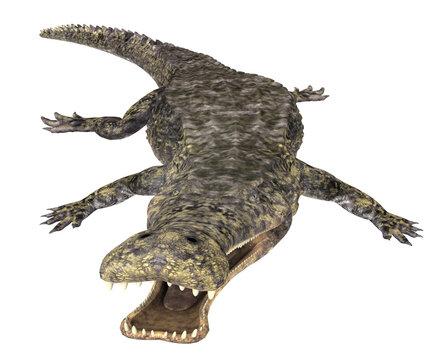Prähistorisches Krokodil Sarcosuchus, Freisteller