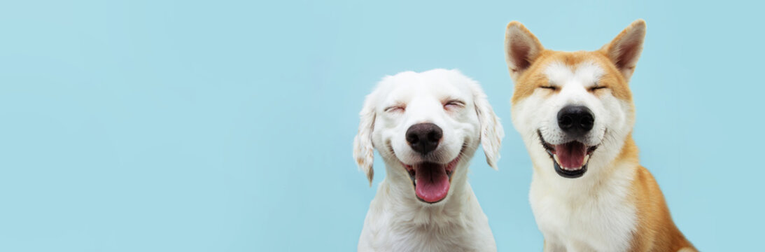 Banner two smiling dogs with happy expression. and closed eyes. Isolated on blue colored background.