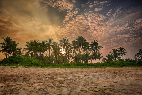 HDR Picture of Coconut trees against sunrise background at varca beach goa