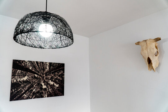 White room with a semi sphere lamp, a trees frame and a cow skull