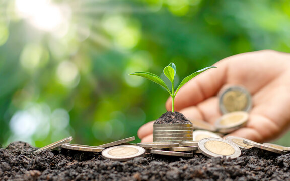 Trees grow on money stacks in an environment with this money-saving and sustainable business investment idea.