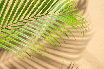 nature background of green palm leaf with shadows overlay on sand beach texture background.