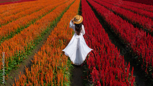Wall mural Beautiful girl in white dress travel at Celosia flowers fields, Chiang Mai.