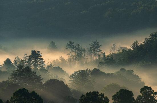 USA, Georgia, Fog above pine trees in Blue Ridge Mountains at sunrise