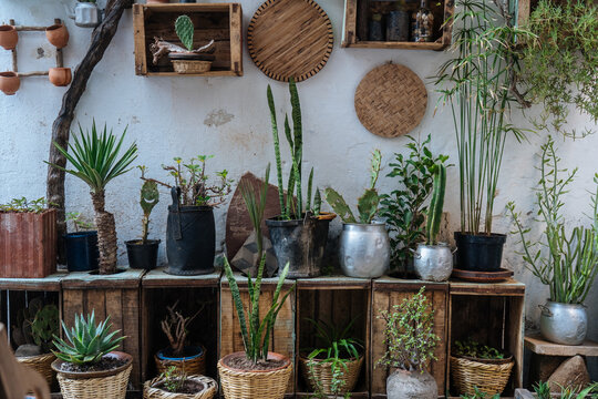 Stylish plants and succulents on wooden boxes