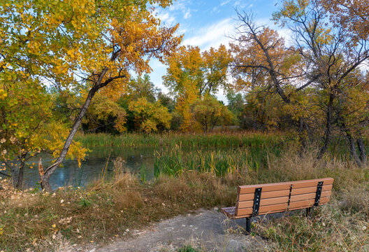 Park Bench Looking onto Pond with Colorful Fall Trees