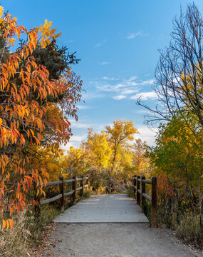 Wood Post Fenced Footbridge Surrounded by Colorful Fall Trees