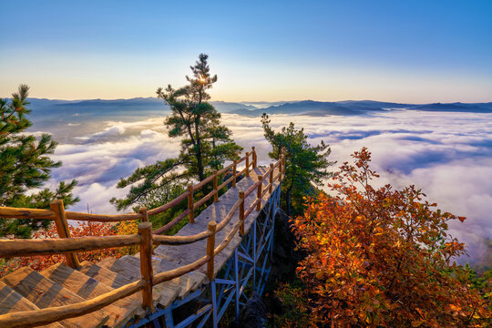 The walkway and morning mists in autumn landscape