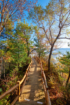 The wood boardwalk in autumn forest.