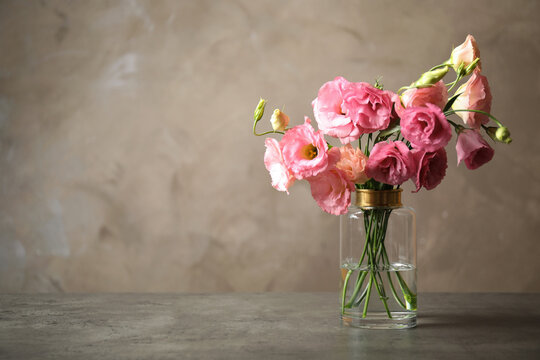 Beautiful pink Eustoma flowers in vase on table against grey background. Space for text