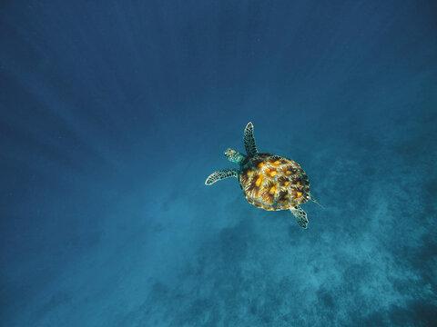 Beautiful underwater shot of a sea turtle