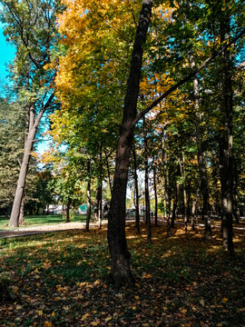 Autumn forest Fund. Bright colored tree, red-orange foliage in the autumn Park. Change in the nature of the incident. Yellow leaves in October, the season of the Sun in the blue sky, Sunny day, weathe