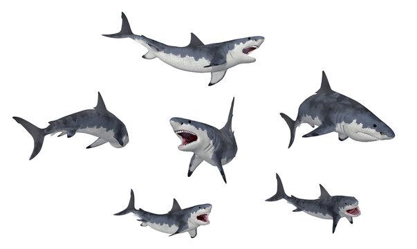 Weiße Haie, Freisteller