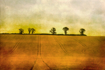 Silhouettes of a trees in a field on a grunge background