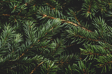 Christmas tree, branches. Christmas, New Year. Wallpaper. Flat lay, top view