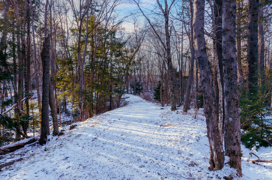 The walking trail in Hemlock Ravine Park has a light covering of snow on a pleasant winter's day transforming the woodland into a magical realm.
