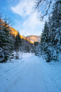 road through synevyr national park in winter. trees and path covered in snow. beautiful mountain landscape in afternoon