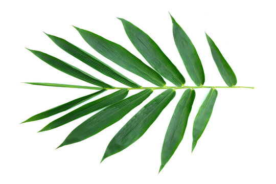 Several large bamboo leaves. White isolated background.