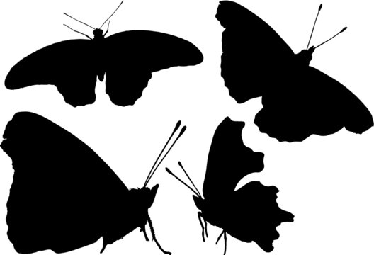 4 silhouette of a butterfly