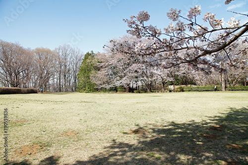 公園 片倉 城址 片倉城跡公園|八王子市公式ホームページ