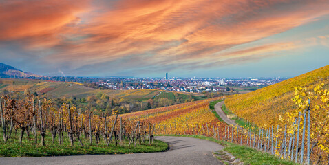 Struempfelbach - Vineyards at Weinstadt region - beautiful landscape in autum close to Stuttgart, Baden-Wuerttemberg, Germany