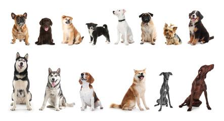 Set of adorable pets on white background. Banner design