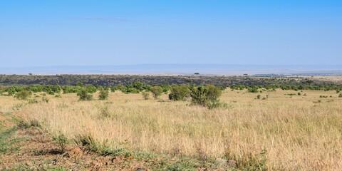 Kenya: landscape of maasai mara park