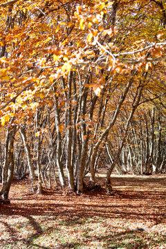 Bright golden autumn nature landscape.