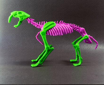 A bicolored smilodon skeleton isolated on dark gray background.