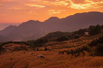 The rice field in sunrise