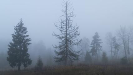 Drzewa we mgle w lesie i na polu.