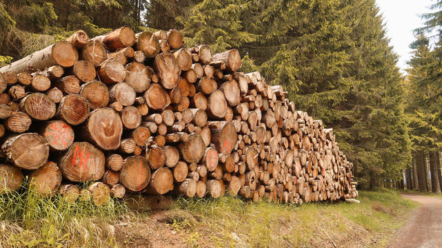 Aufgetürmte Holzstämme im Wald Harz