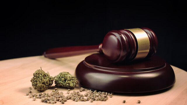 Cannabis, marijuana and hemp products on court table with judges gavel. Illegal crime concept.
