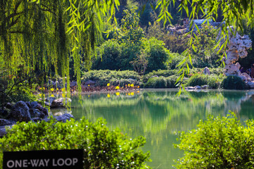 a stunning shot of deep green lake water with lush green trees reflecting off the lake with weeping willow trees handing over the lake at Huntington Library and Botanical Gardens in San Marino