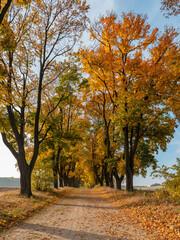 Fototapeta Złota jesień