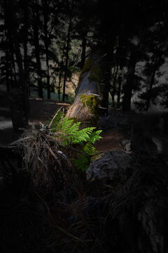 Vertical shot of a mossy log in a dark forest