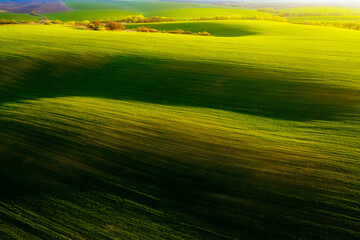 Wall Mural - Aerial photography of green wavy field with shadows from sunlight in the evening.