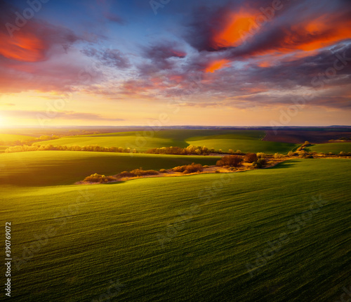 Wall mural Majestic aerial photography of green wavy field in the evening sunlight.
