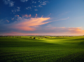 Wall Mural - Majestic aerial photography of green wavy field in the evening sunlight.