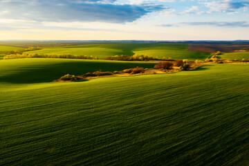 Wall Mural - Splendid aerial photography of green wavy field in sunny day. Top view drone shot.