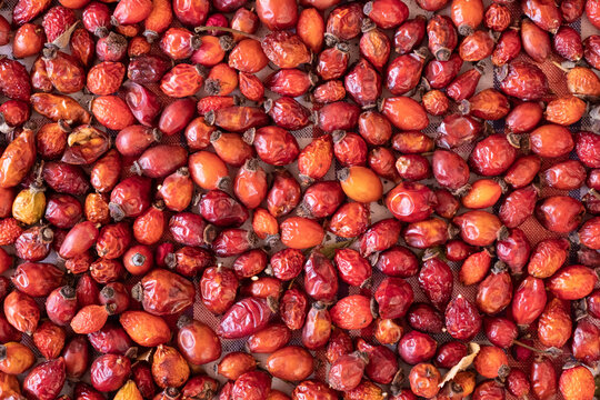 Closeup Image of Dried Rose Hips