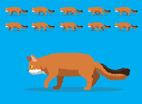 Animal Animation Sequence Cat Somali Cartoon Vector