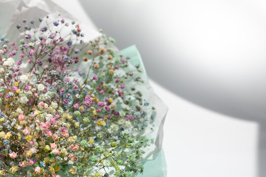 Bouquet of rainbow baby's breath (gypsophila) on white and grey background. Copy space.